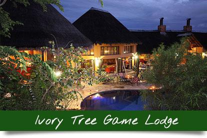 Ivory-Tree